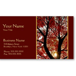 Personalized business card at Omniverz.com